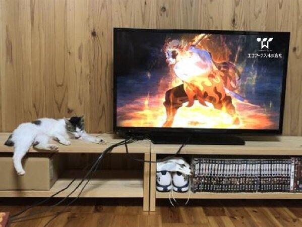 【猫も喜ぶ天然素材】