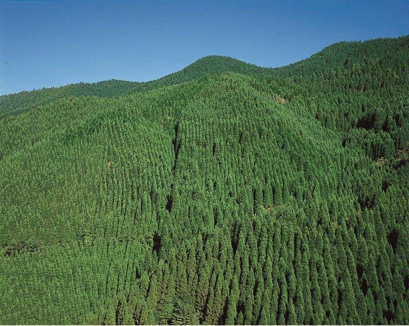 天然乾燥木材